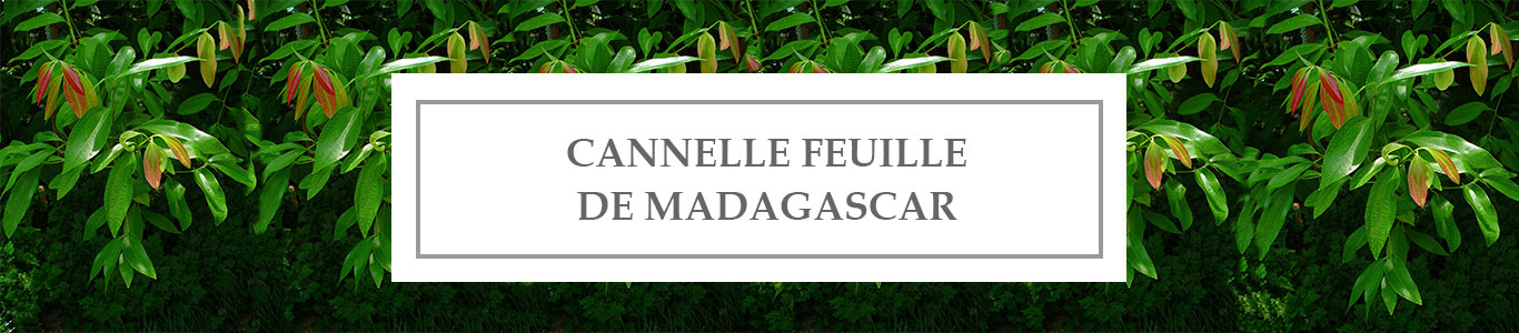 HE Cannelle Feuille de Madagascar