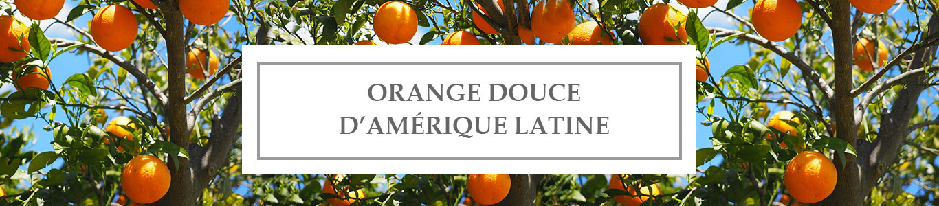HE Orange Douce d'Amérique Latine