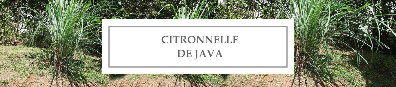 HE Citronnelle de Java
