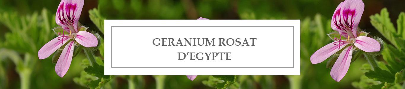 HE Géranium Rosat d'Egypte