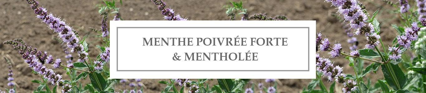 HE Menthe Poivrée Forte & Mentholée